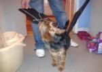 ricky-austin-batdog