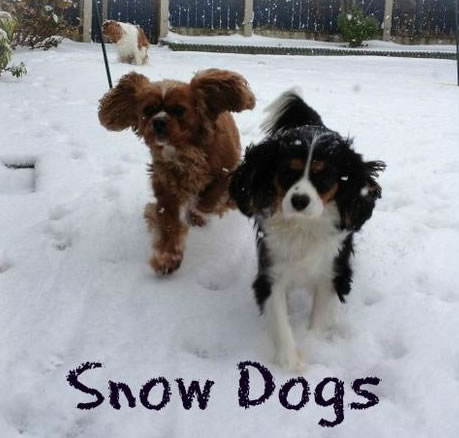snow dogs Friday: Wrexham Snow   Live Updates And Information