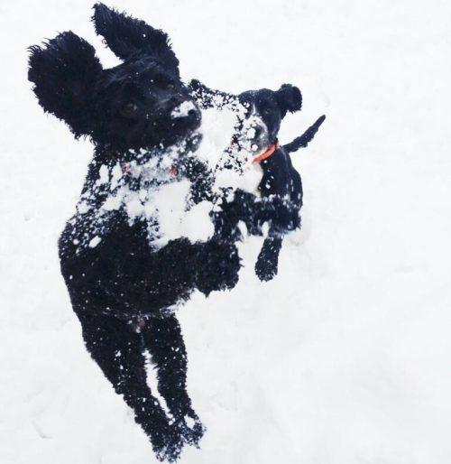classic-dog-snow-shot