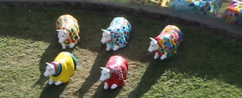 wrexham-sheep-weekend