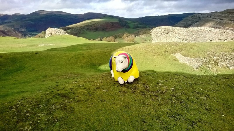 sheep-dinas-bran-2